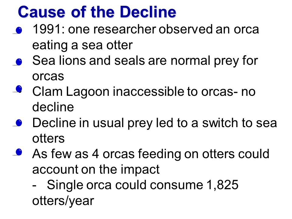 Cause of the Decline 1991: one researcher observed an orca eating a sea otter. Sea lions and seals are normal prey for orcas.