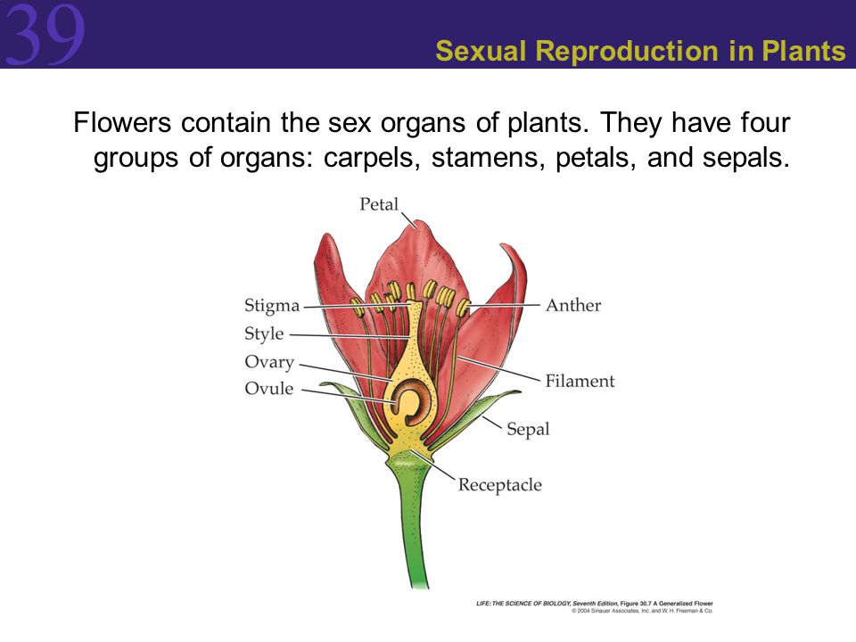 sexual reproduction pictures was