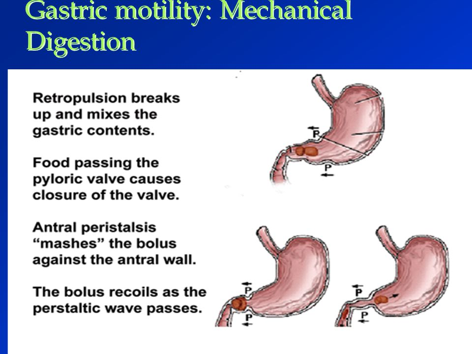 Gastric motility: Mechanical Digestion