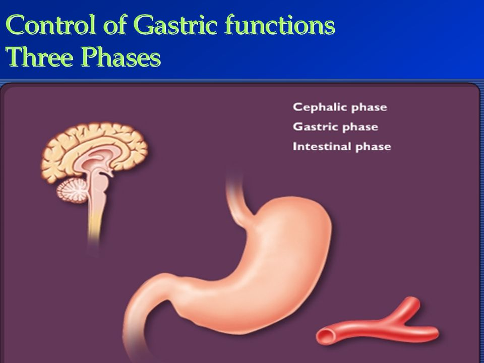 Control of Gastric functions Three Phases