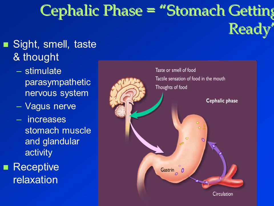 Cephalic Phase = Stomach Getting Ready