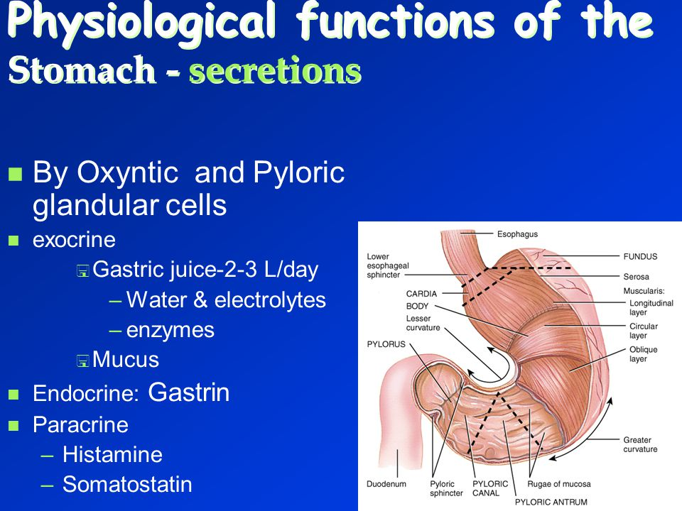 Physiological functions of the Stomach - secretions