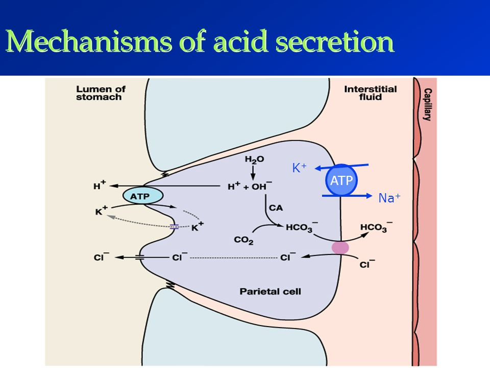 Mechanisms of acid secretion