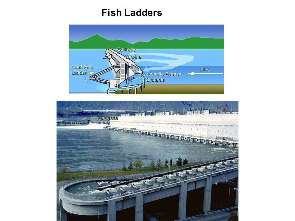 fish ladder diagram 017 fisheries. - ppt download #12
