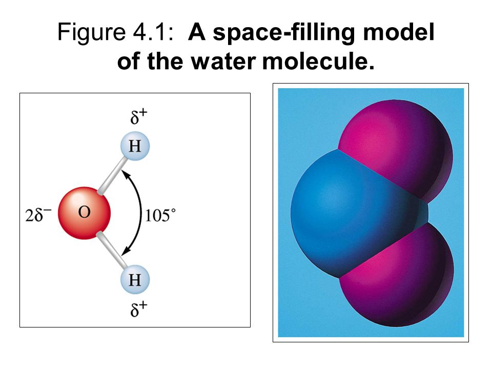 Figure 4.1: A space-filling model of the water molecule.