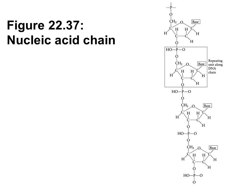 Figure 22.37: Nucleic acid chain