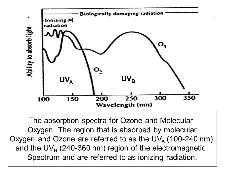 The absorption spectra for Ozone and Molecular