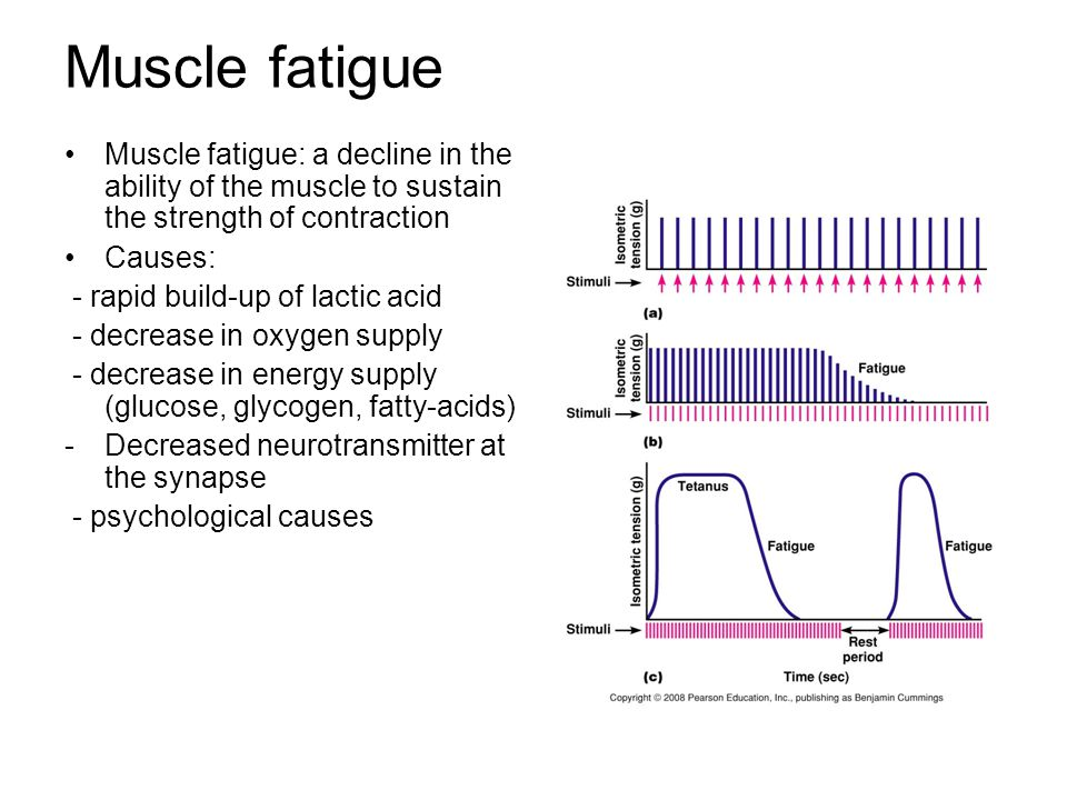 muscle fatigue What causes muscle fatigue, muscle tiredness and muscle weakness after a work out why do our muscles get fatigued, tired, weak, sore, burn and hurt after ex.