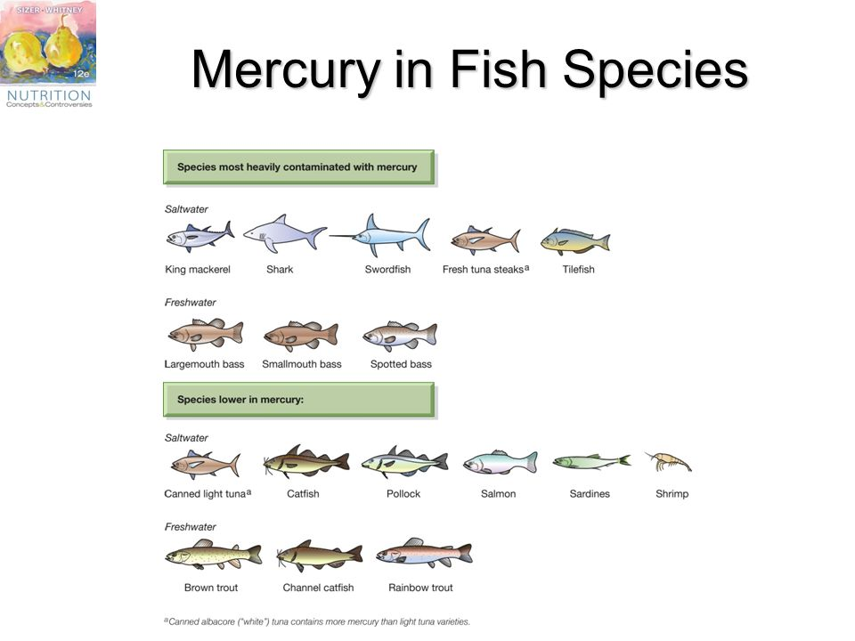 Chapter 5 the lipids fats oils phospholipids and for Mercury in fish