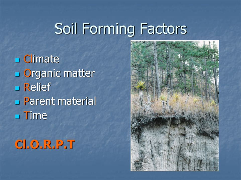 Review and soil formation ppt video online download for Soil forming factors