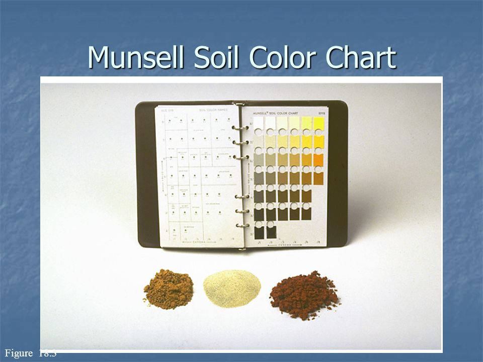 Review And Soil Formation Ppt Video Online Download