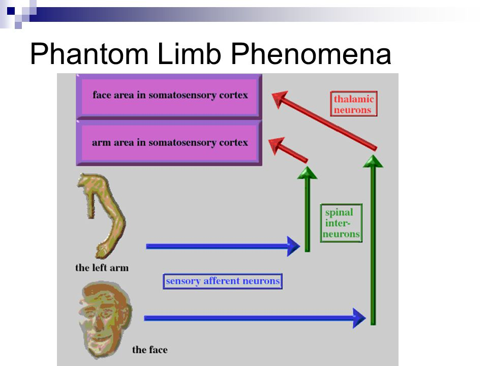a study of the phantom limb phenomena Giving up the ghost: a review of phantom limb phenomena  until this can be accomplished, little progress in the study of phantom limb phenomena can be.