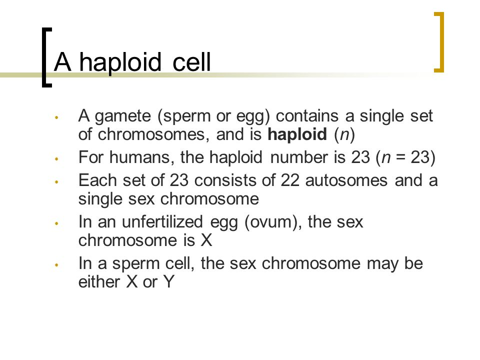 A haploid cell A gamete (sperm or egg) contains a single set of chromosomes, and is haploid (n) For humans, the haploid number is 23 (n = 23)