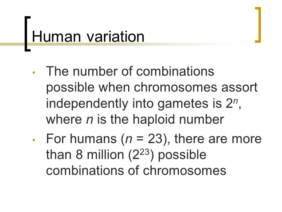 Human variation The number of combinations possible when chromosomes assort independently into gametes is 2n, where n is the haploid number.