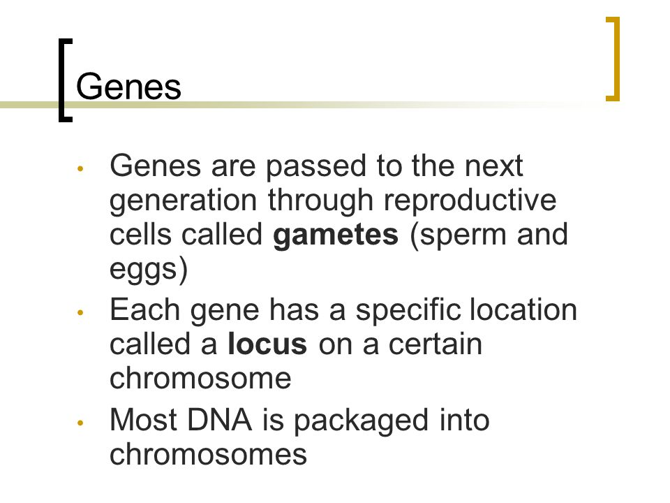 Genes Genes are passed to the next generation through reproductive cells called gametes (sperm and eggs)