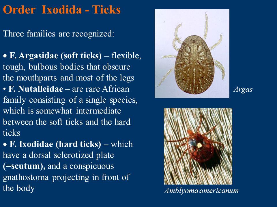 Order Ixodida - Ticks Three families are recognized: