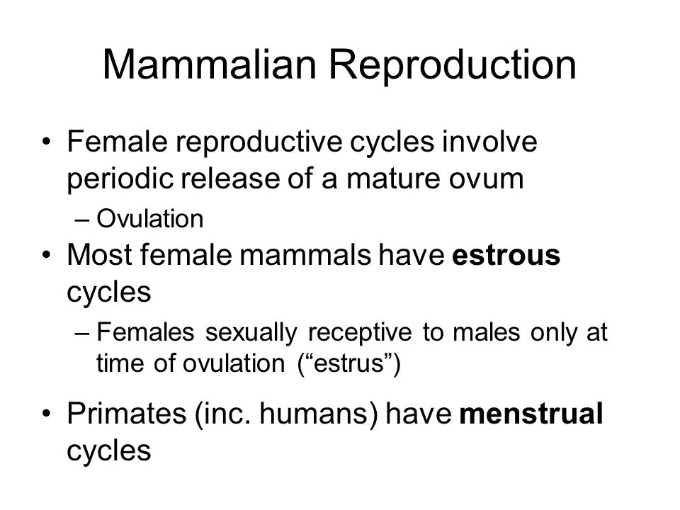 mammalian sexual reproduction
