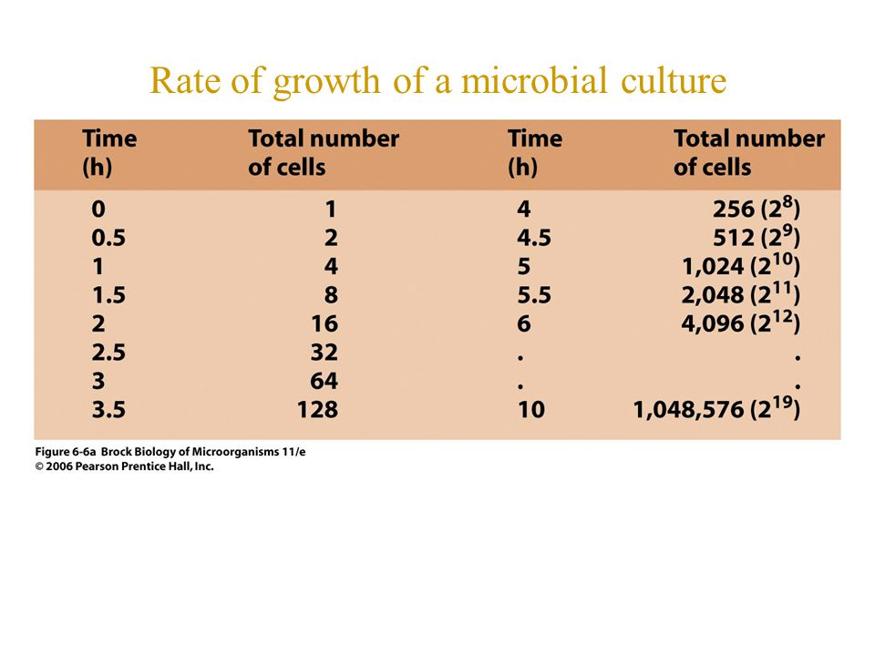 Rate of growth of a microbial culture