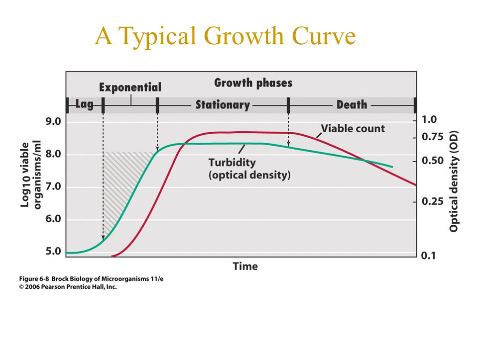 A Typical Growth Curve