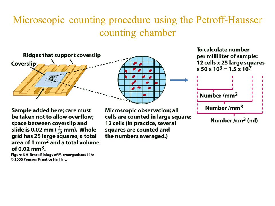 Microscopic counting procedure using the Petroff-Hausser counting chamber