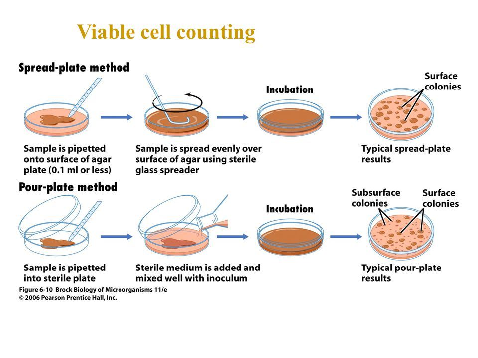 Viable cell counting