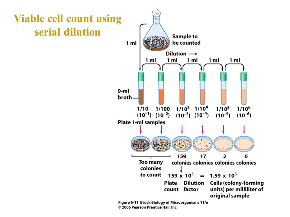 Viable cell count using serial dilution