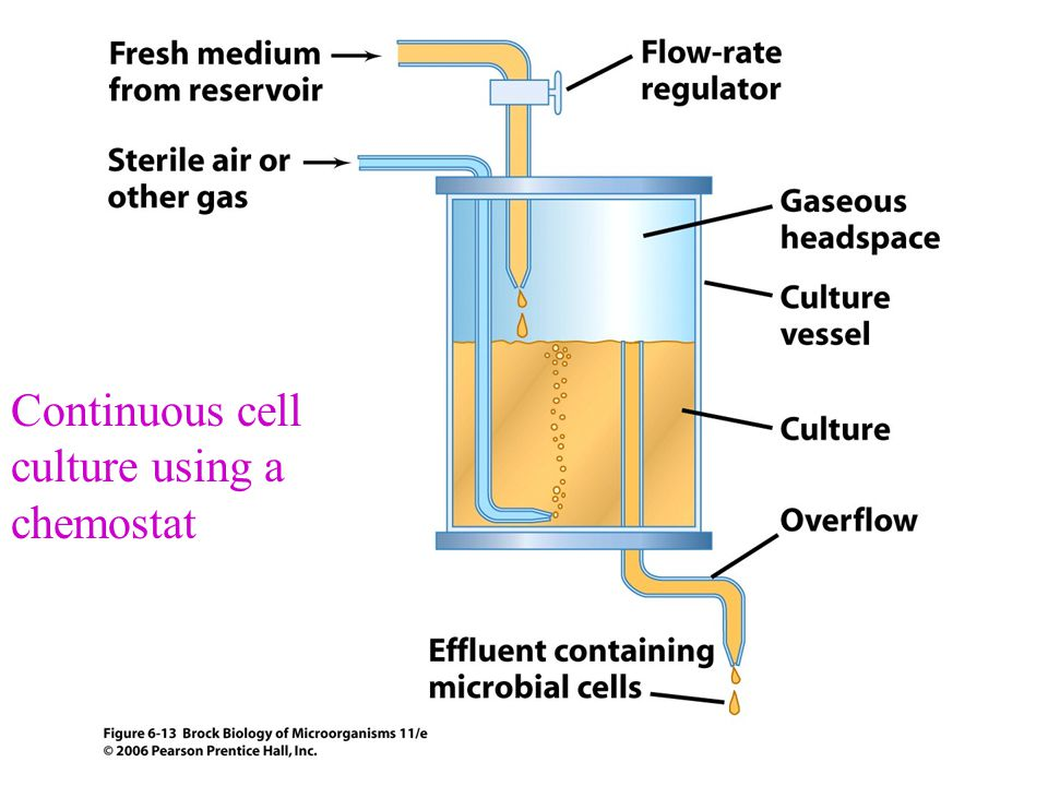 Continuous cell culture using a chemostat