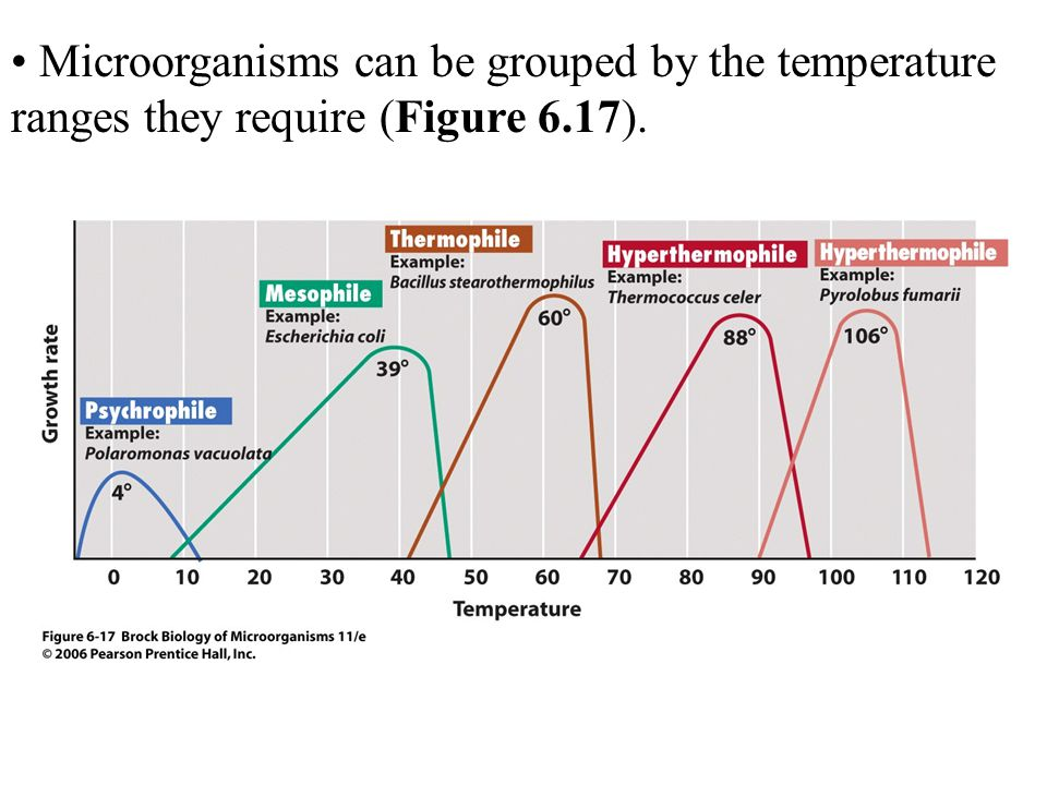 Microorganisms can be grouped by the temperature ranges they require (Figure 6.17).