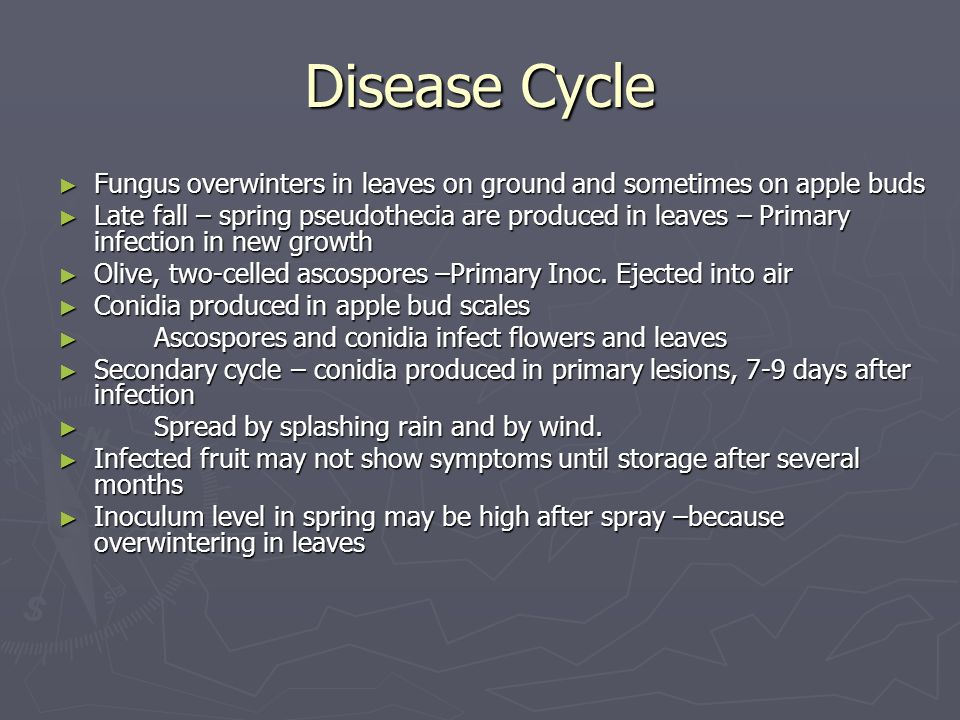 Disease Cycle Fungus overwinters in leaves on ground and sometimes on apple buds.