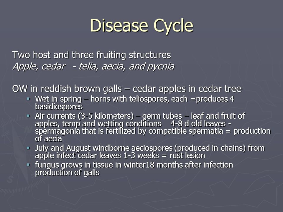 Disease Cycle Two host and three fruiting structures