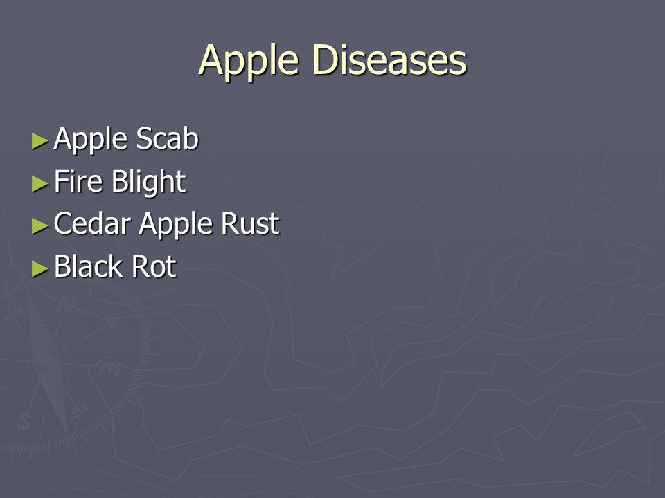Apple Diseases Apple Scab Fire Blight Cedar Apple Rust Black Rot