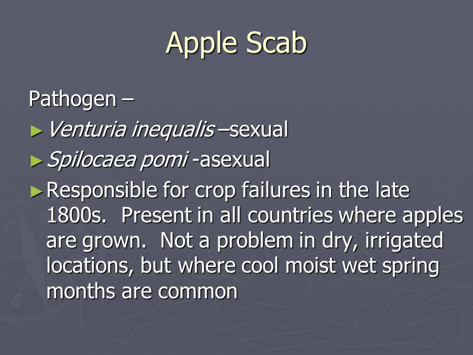 Apple Scab Pathogen – Venturia inequalis –sexual