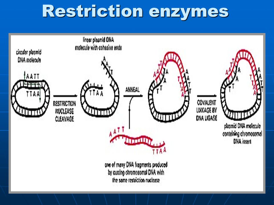 how to choose restriction enzymes
