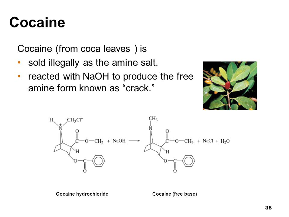 Cocaine Cocaine (from coca leaves ) is