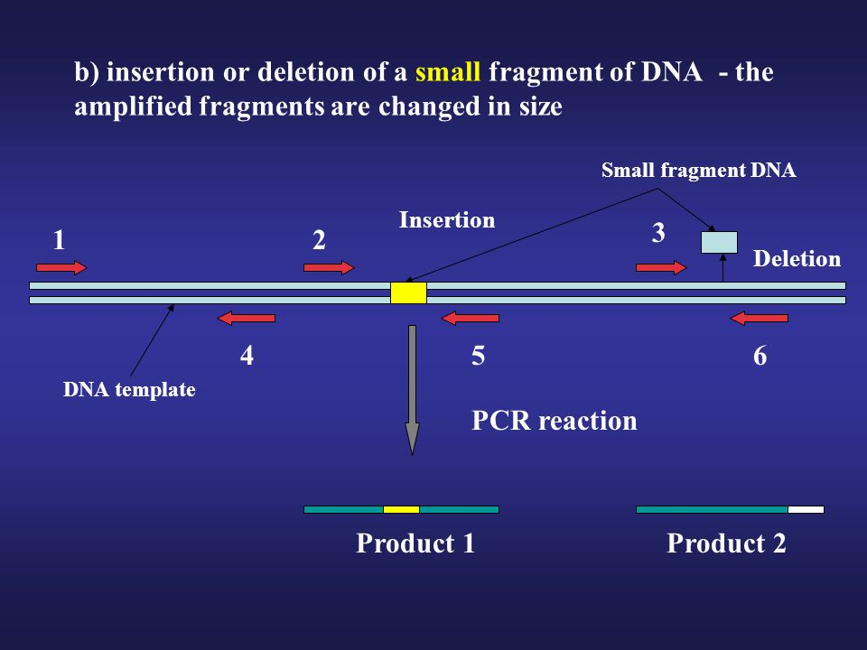 b) insertion or deletion of a small fragment of DNA - the amplified fragments are changed in size