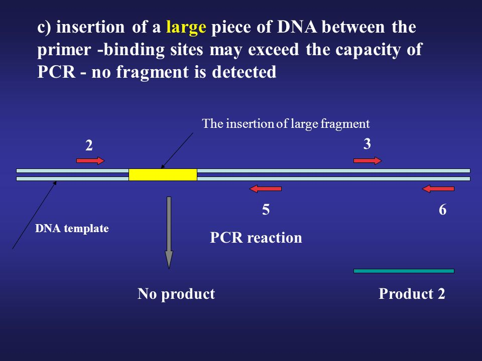 c) insertion of a large piece of DNA between the primer -binding sites may exceed the capacity of PCR - no fragment is detected