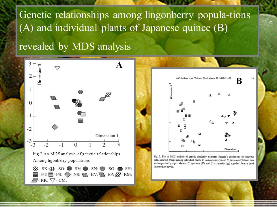 Genetic relationships among lingonberry popula-tions (A) and individual plants of Japanese quince (B) revealed by MDS analysis