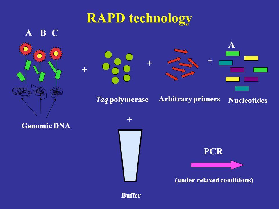 RAPD technology A B C A + + + + PCR Taq polymerase Arbitrary primers