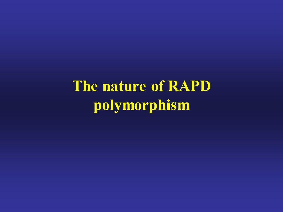 The nature of RAPD polymorphism
