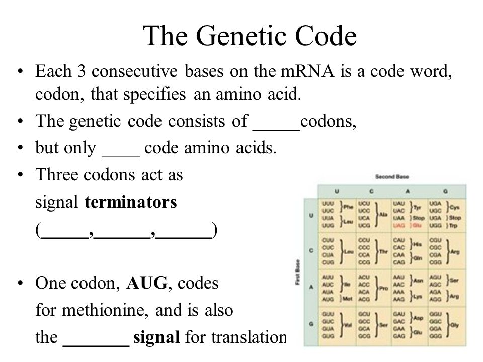 how to remember amino acid codons