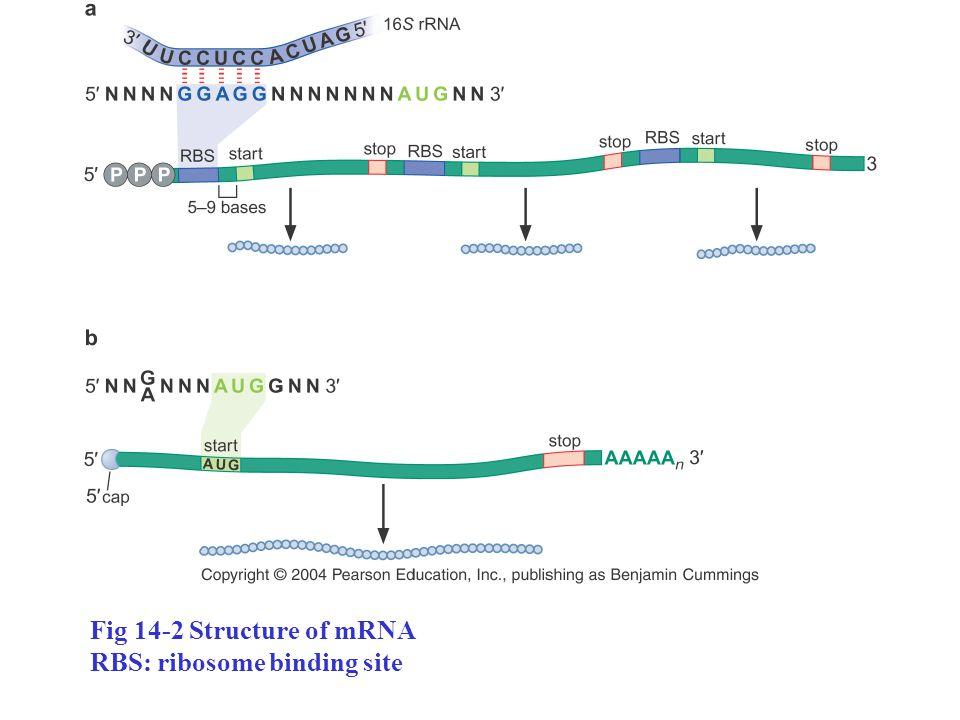 Ch14 Translation Messenger RNA Transfer RNA - ppt video ...