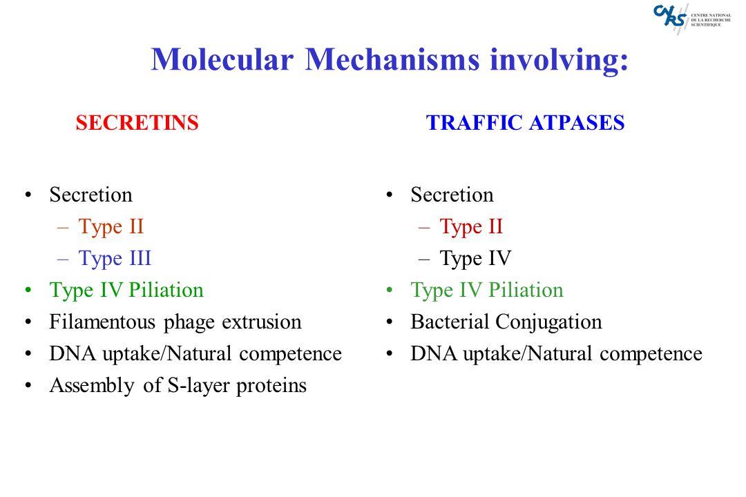 Molecular Mechanisms involving: