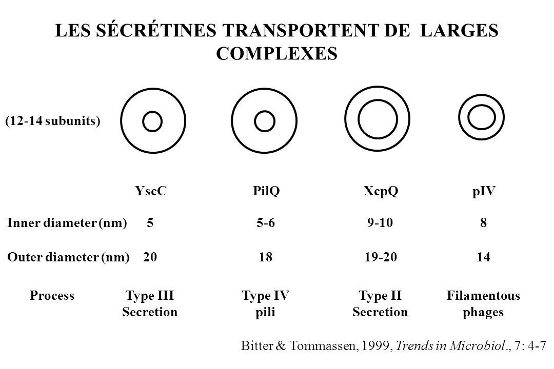 LES SÉCRÉTINES TRANSPORTENT DE LARGES COMPLEXES
