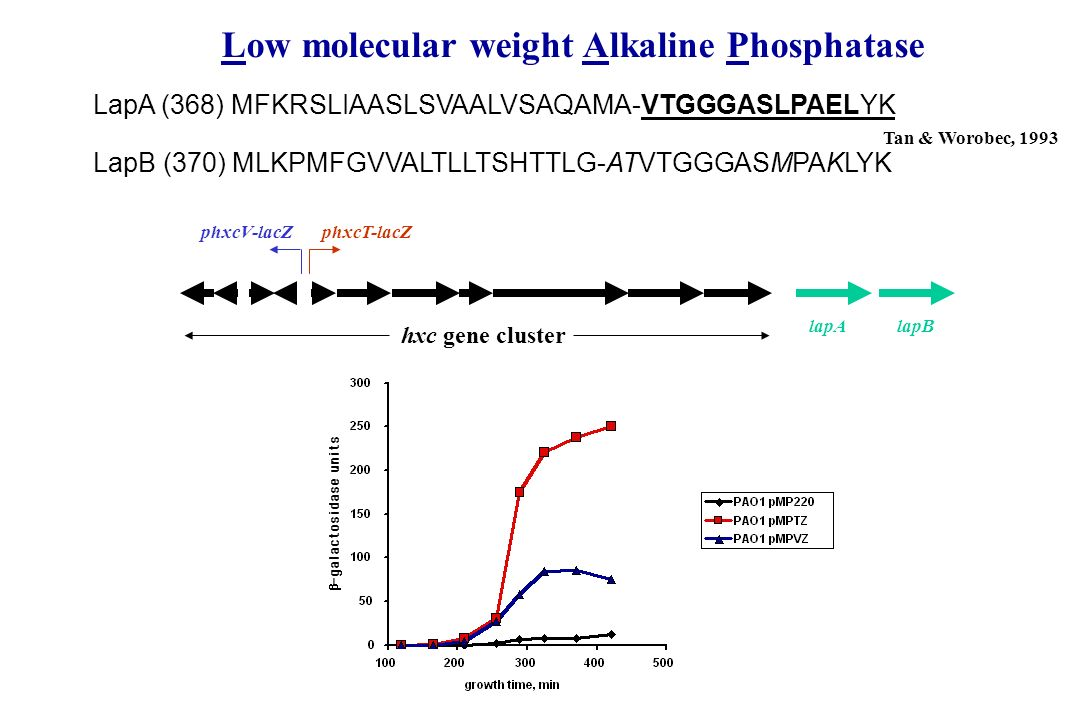 Low molecular weight Alkaline Phosphatase