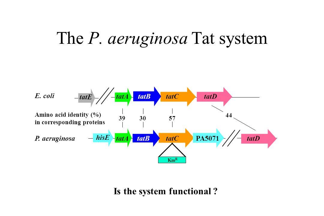 The P. aeruginosa Tat system