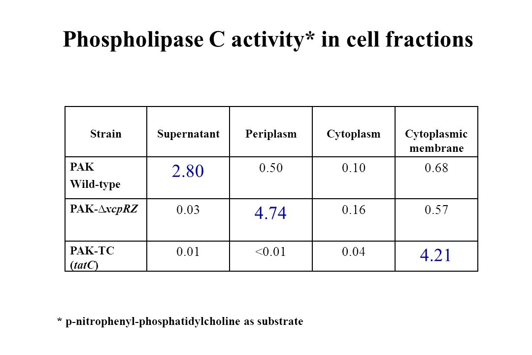 Phospholipase C activity* in cell fractions