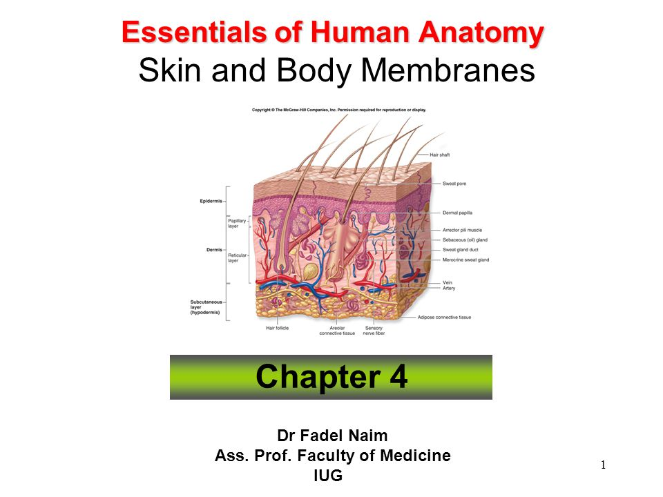 Skin And Body Membranes Chapter 4 Best Skin 2018