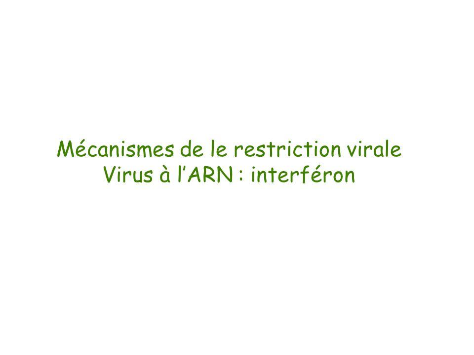 Mécanismes de le restriction virale Virus à l'ARN : interféron