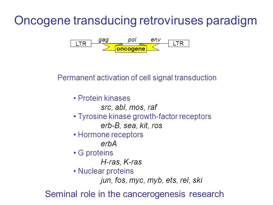 Oncogene transducing retroviruses paradigm