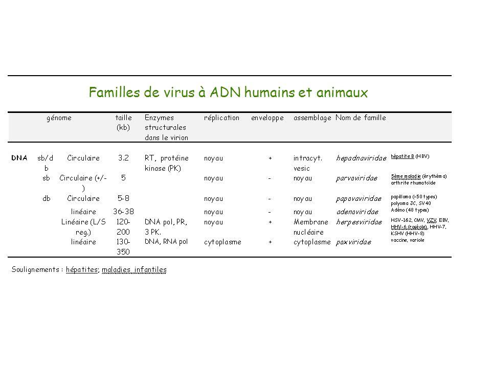 Familles de virus à ADN humains et animaux